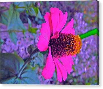 Hot In Pink Canvas Print by Randy Rosenberger