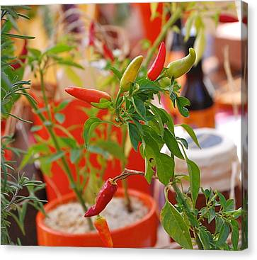 Canvas Print featuring the photograph Hot Peppers by Mary McAvoy