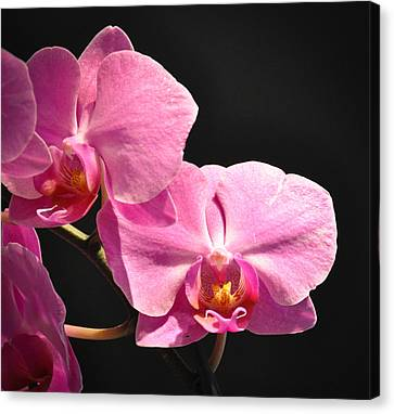 Canvas Print featuring the photograph Hot Pink Orchids by Ronda Broatch