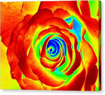 Hot Rose Canvas Print