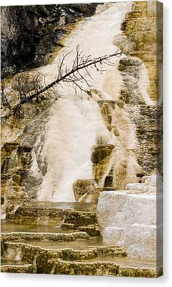 Canvas Print featuring the photograph Hot Spring Pine by J L Woody Wooden