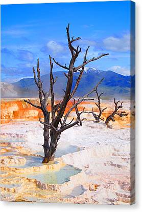 Hot Spring Trees Canvas Print