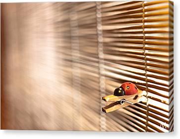 House Of The Rising Ladybug Canvas Print by Máté Makarész