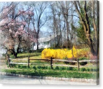 House With Magnolias And Forsythia Canvas Print by Susan Savad