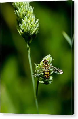 Hoverfly On Grass Canvas Print by Lori Coleman