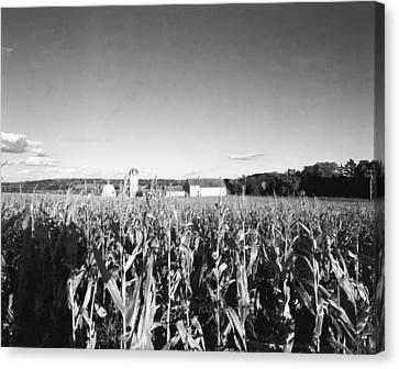 How Corny Canvas Print by Jan W Faul