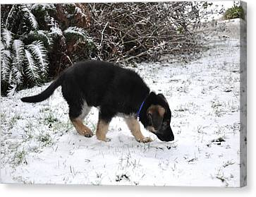 How Does Snow Smell Canvas Print by Tanya  Searcy