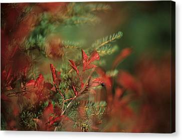 Huckleberry Leaves In Fall Color Canvas Print by One Rude Dawg Orcutt