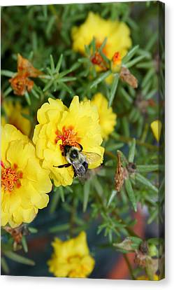 Canvas Print featuring the photograph Hugging The Flower by Paula Tohline Calhoun