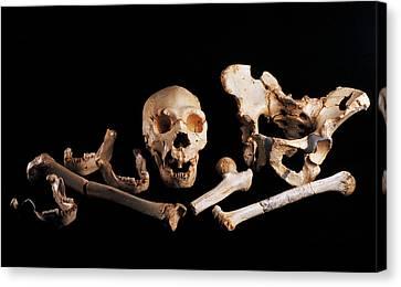 Human Fossils, Sima De Los Huesos Canvas Print by Javier Truebamsf