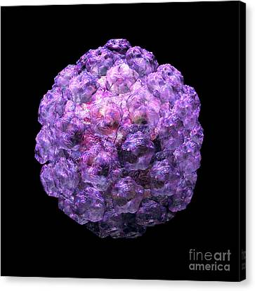 Canvas Print featuring the digital art Human Papilloma Virus  10 by Russell Kightley