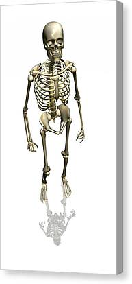 Human Skeleton, Artwork Canvas Print by Friedrich Saurer
