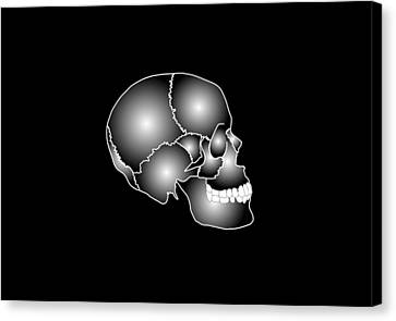 Human Skull Anatomy, Artwork Canvas Print by Francis Leroy, Biocosmos