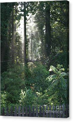 Humid Canvas Print by Cris Hayes