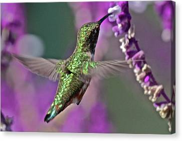 Hummer Canvas Print by Paul Marto
