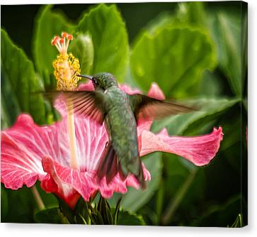 Hummers In The Garden Five Canvas Print by Michael Putnam