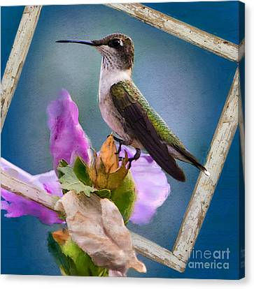 Hummingbird Picture Pretty Canvas Print by Betty LaRue
