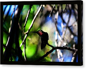 Canvas Print featuring the photograph Hummingbird Resting On A Twig by Susanne Still