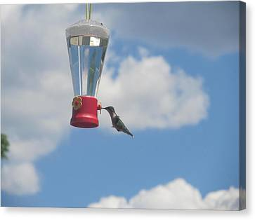 Canvas Print featuring the photograph Just A Hummingbird by Tina M Wenger