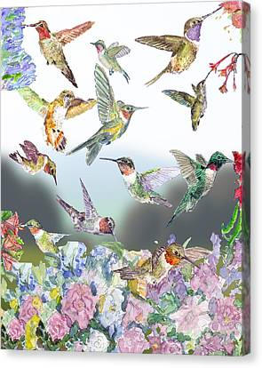 Hummingbirds Galore Canvas Print by Barry Jones