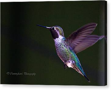 Hummingbird's Visit Canvas Print by Dorothy Cunningham