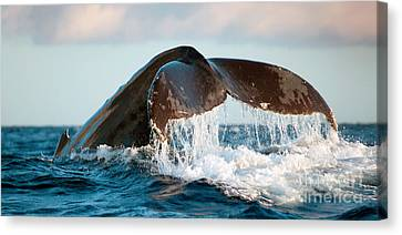 Michael Sweet Canvas Print - Humpback Whale Tail by Michael Sweet