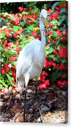 Canvas Print featuring the photograph Hungry Egret  by Denise Moore