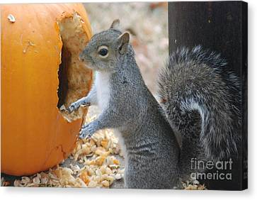 Canvas Print featuring the photograph Hungry Squirrel by Mark McReynolds