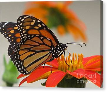 Canvas Print featuring the photograph Hungry by Tina Marie