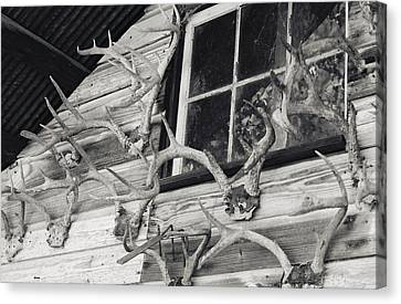 Hunters Deer Horns On Shed Canvas Print by Floyd Smith