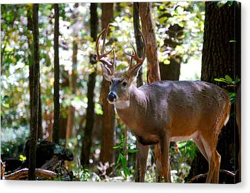 Canvas Print featuring the photograph Hunters Dream 10 Point Buck by Peggy Franz