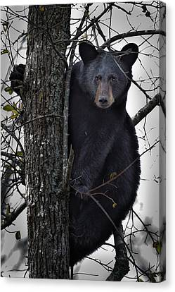 Hunting Berries Canvas Print by Ronald Lutz