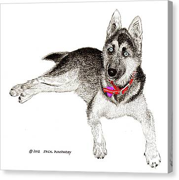 Huskies Canvas Print - Husky With Blue Eyes And Red Collar by Jack Pumphrey