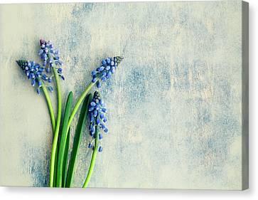 Hyacinth Canvas Print by Jim Franco