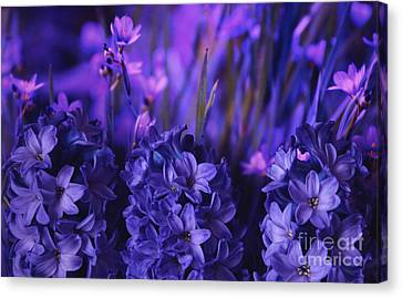 Hyacinths  Canvas Print by Marjorie Imbeau