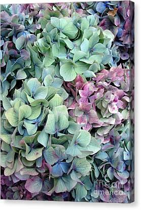 Hydrangea Flower Background Canvas Print by Jane Rix