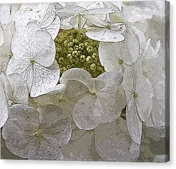 Canvas Print featuring the photograph Hydrangea by Michael Friedman