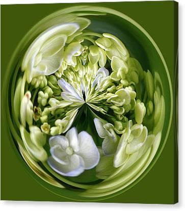 Hydrangea Orb Canvas Print