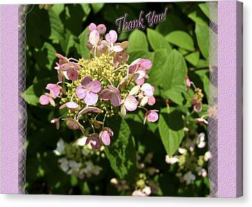 Hydrangea Thank You Canvas Print by Larry Bishop
