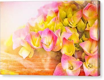 Hydrangeas In Bloom Canvas Print by Elaine Manley