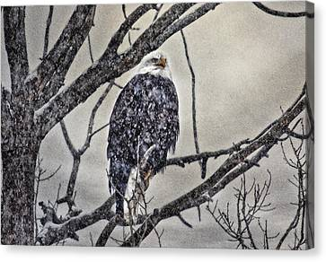 I Am Cold Canvas Print by Gary Smith