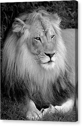 Canvas Print featuring the photograph I Am King by Renee Hardison