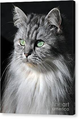 I Am Not Amused Canvas Print by Graham Taylor