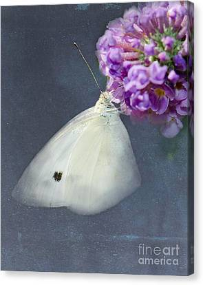 I Dream Of A White Butterfly Canvas Print