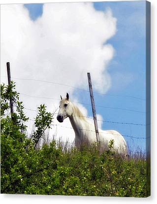 Canvas Print featuring the photograph I Dreamt Of A White Horse by Michael Dohnalek