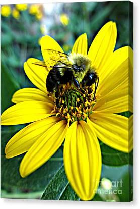 I Love Pollen Canvas Print by Maria Scarfone