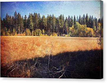I Roam Canvas Print by Laurie Search