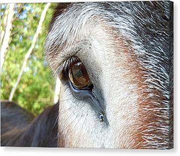 I See You Canvas Print by Anne Gordon