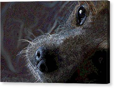I See You Canvas Print by One Rude Dawg Orcutt
