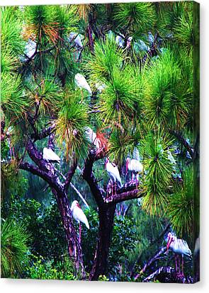 Canvas Print featuring the photograph Ibis-gone To Roost-2 by Joy Braverman